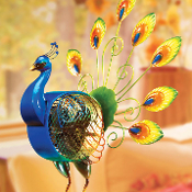 peacock, feathers, colorful